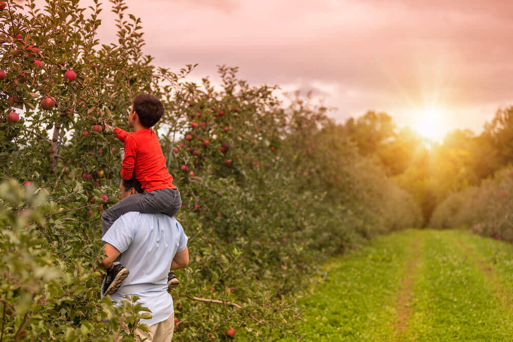 Things to Look Out For When Apple Picking