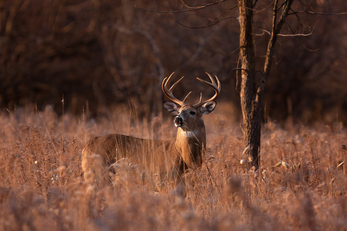 What Are My Options If I Get Injured in a Hunting Accident?
