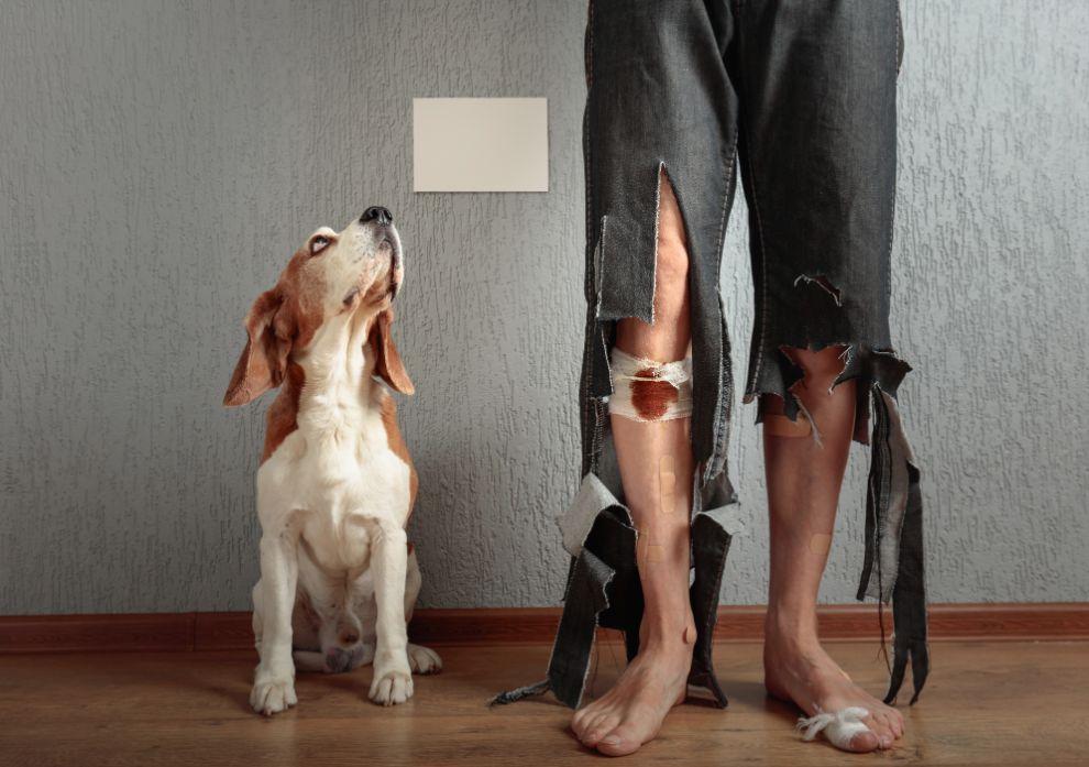 dog-injury