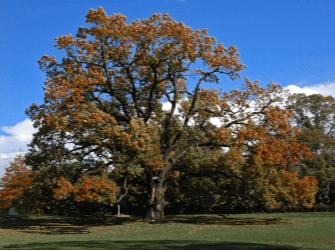 Florham Park, Nj, Usa