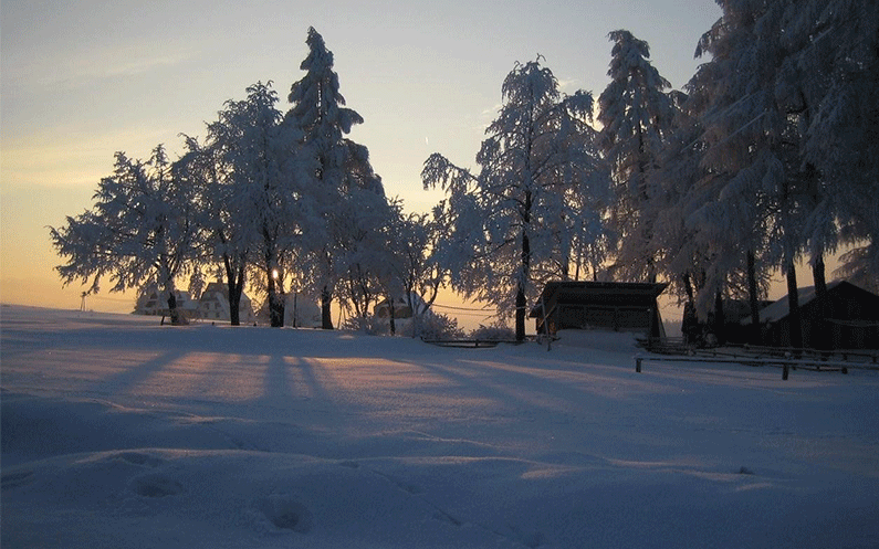 Heavy snow settled all over the land and the trees.