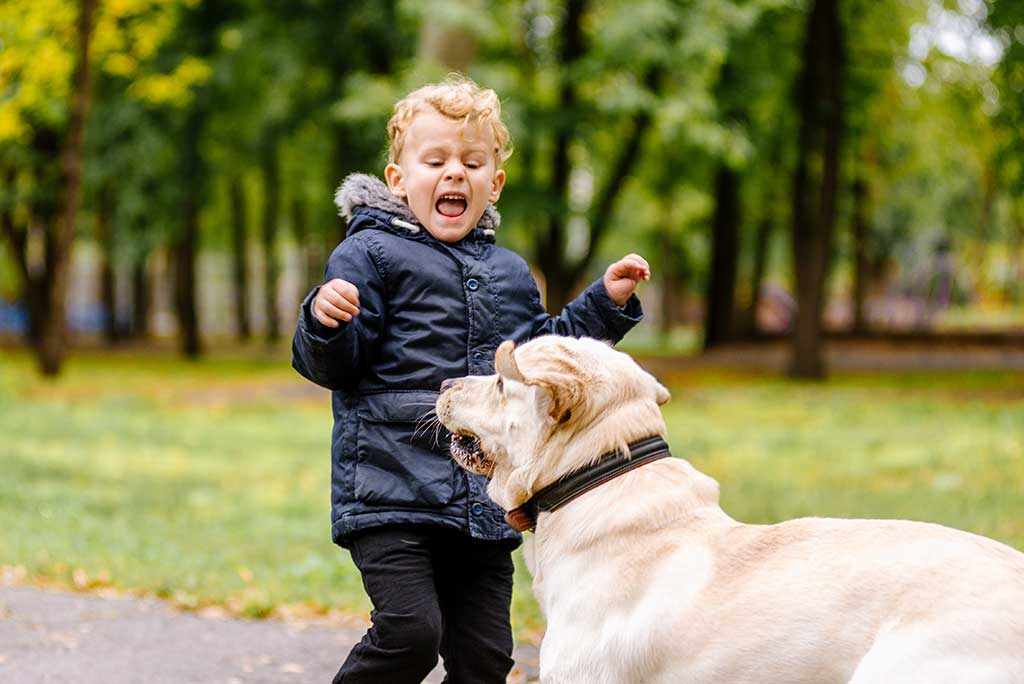 Why Are Children Susceptible To Dog Attacks?
